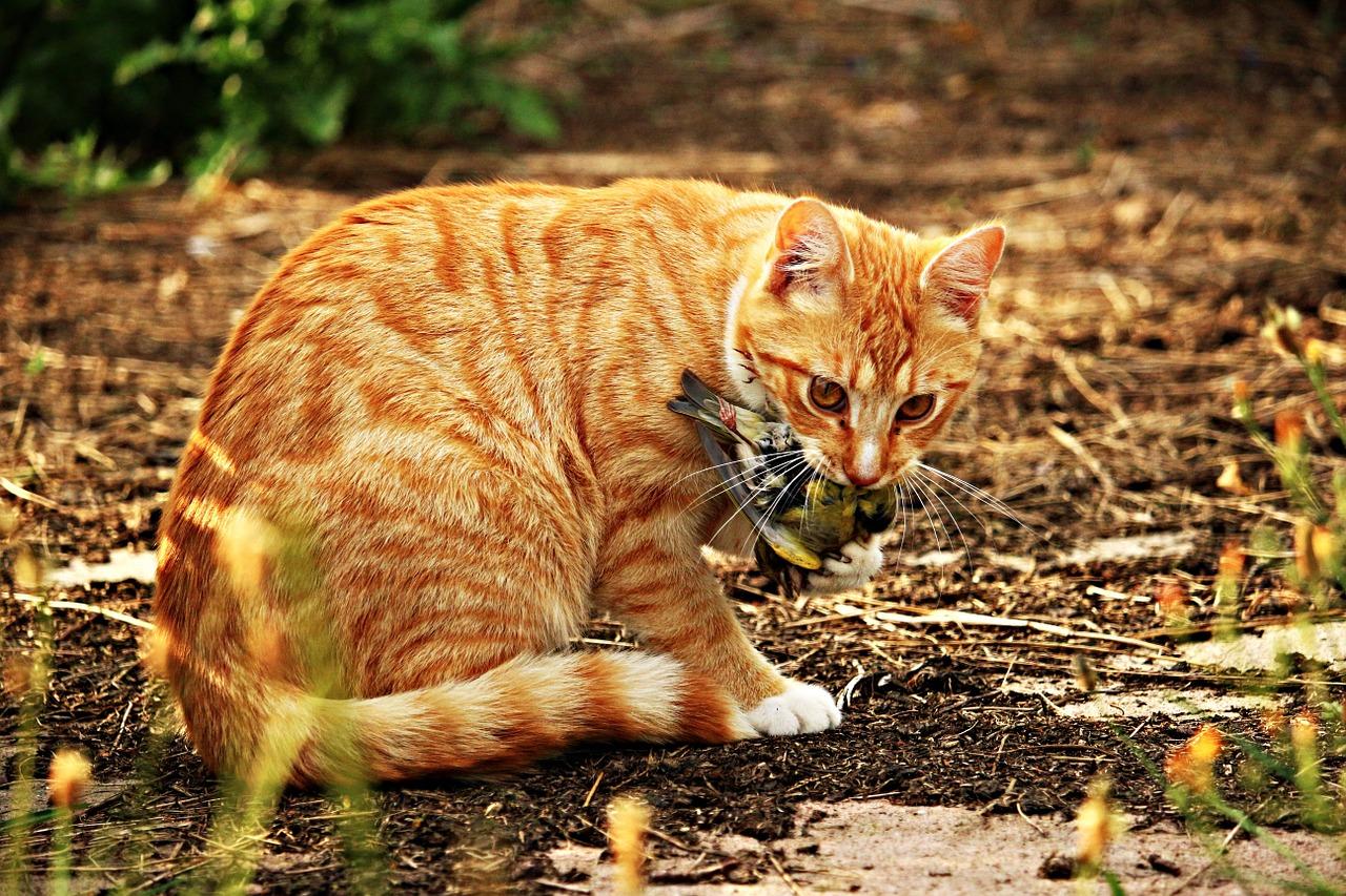 cat-1511023_1280
